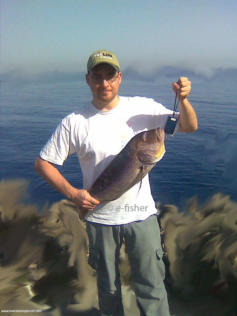 Malta fishing forum a 4 2 kg dentex caught whilst for Sa fishing 5 for 15
